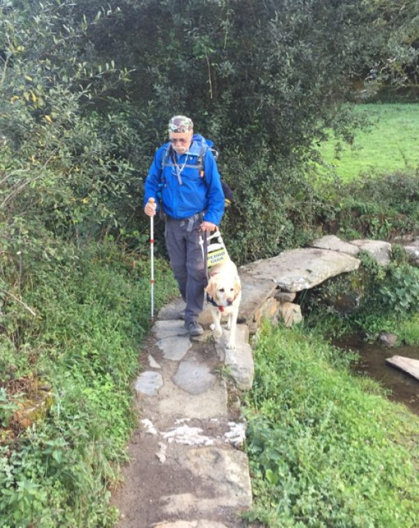 """Phil (yellow Lab in harness with a yellow sign that reads """"PERRO GUIA"""") down a stony path."""
